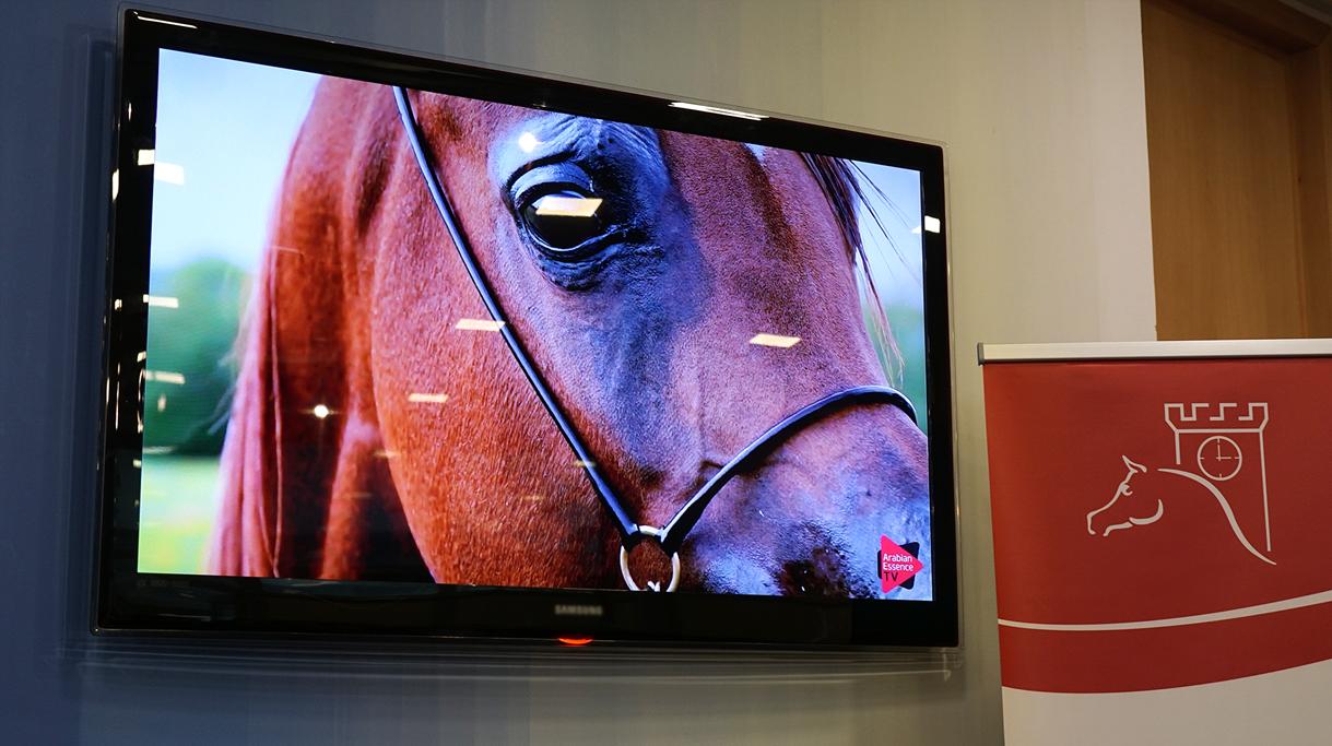 Konie z Janowa Podlaskiego na prezentacji multimedialnej wyświetlanej podczas konferencji