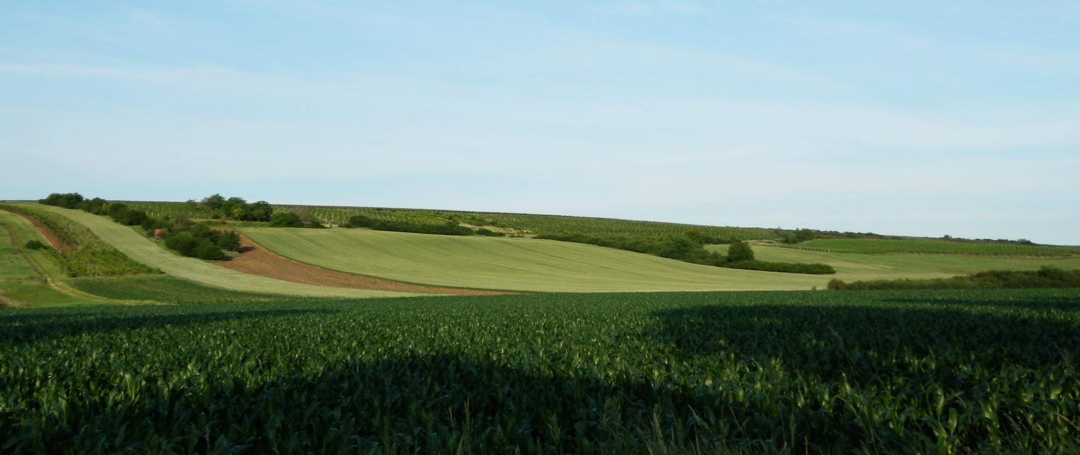 Będą zmiany w obrocie ziemią rolną