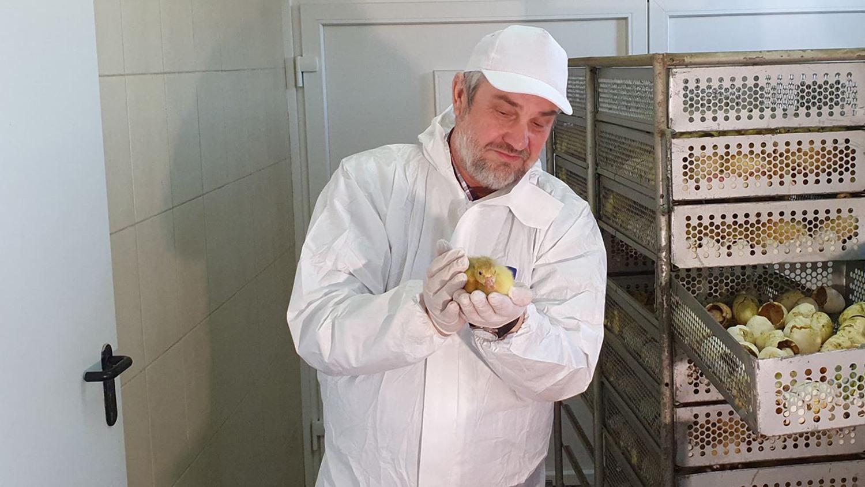 Minister Jan Krzysztof Ardanowski wraz z Fundacją Hodowców Polskiej Białej Gęsi zachęca do zakładania przydomowych hodowli gęsi