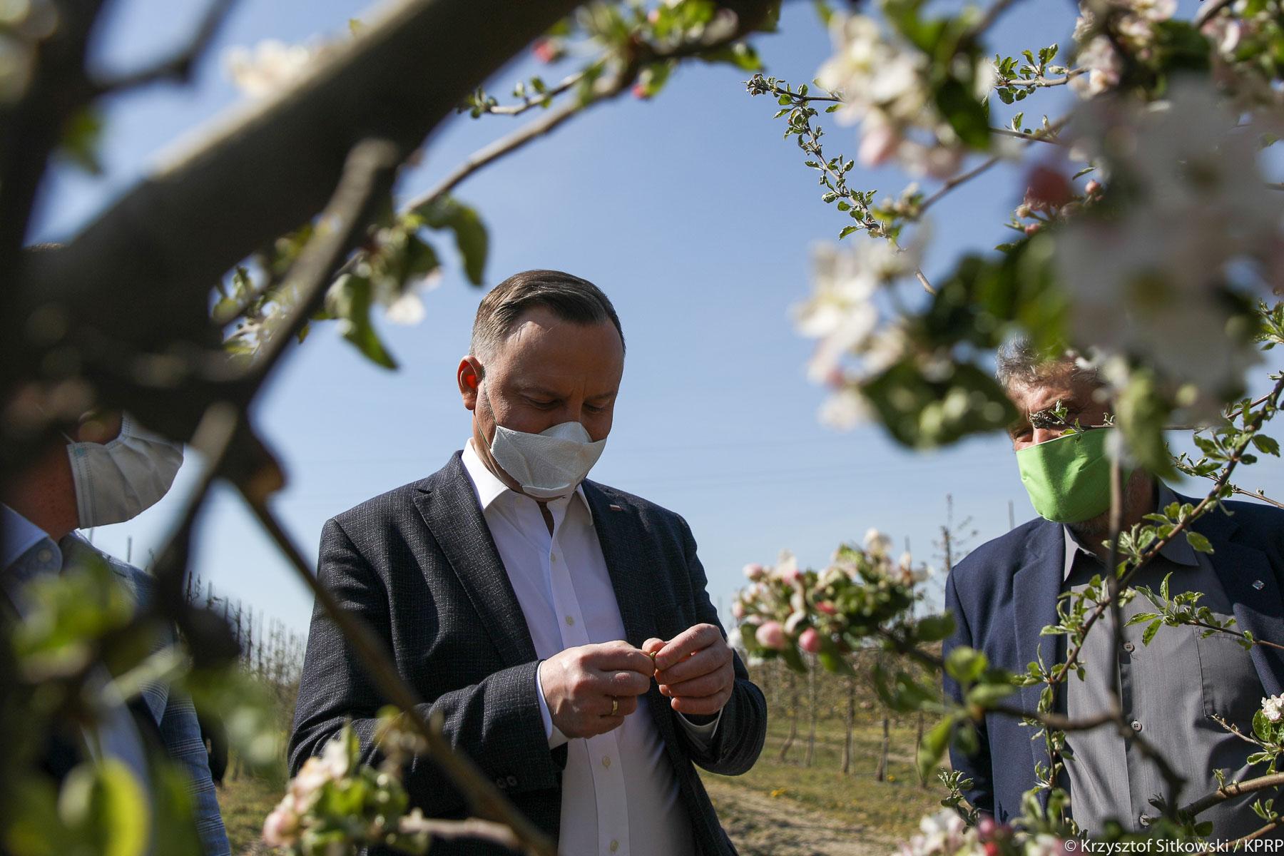 Prezydent A. Duda i min. J. K. Ardanowski zapoznają się ze stanem owocujących drzew