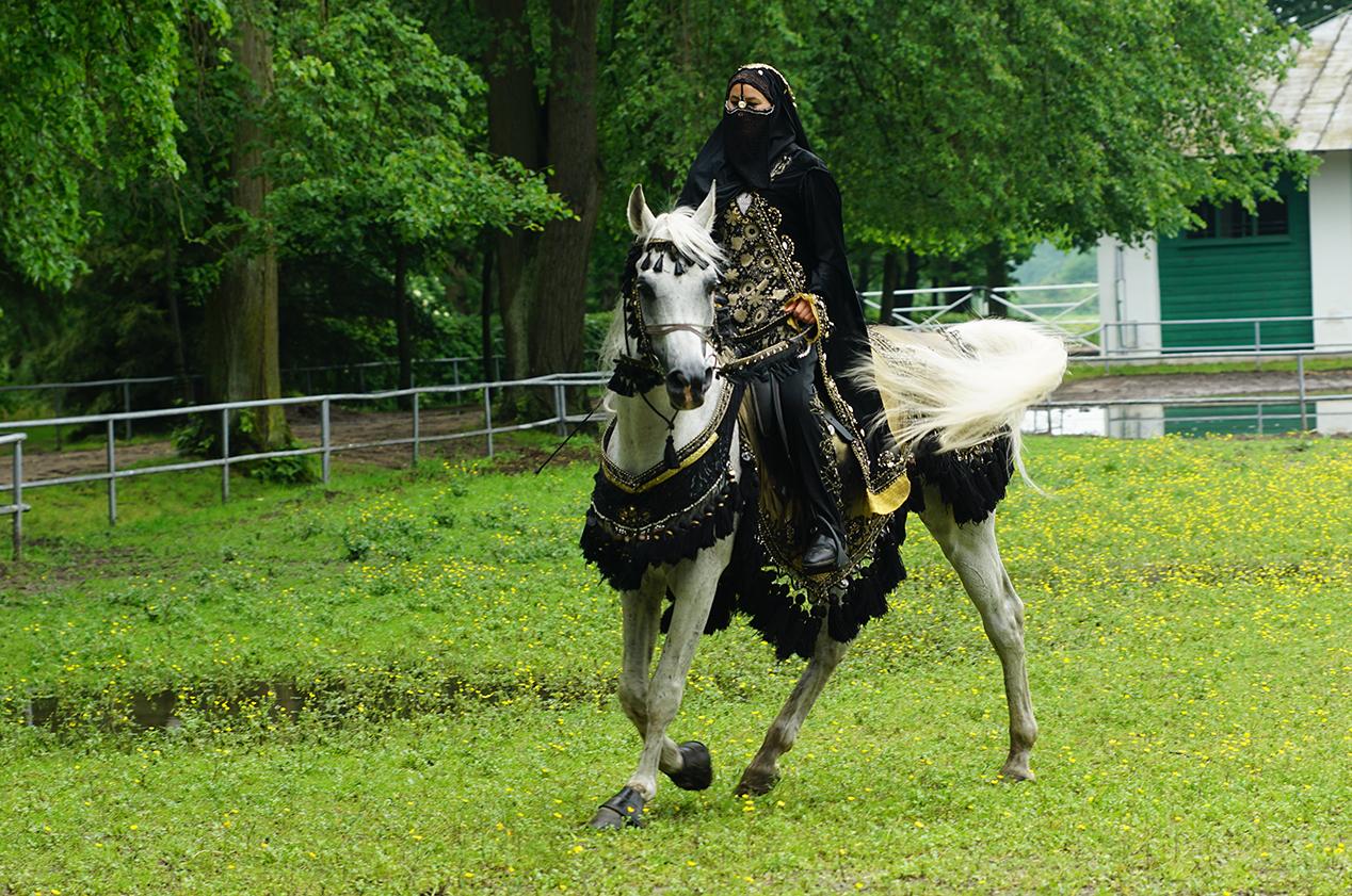 Jeden z najbardziej zasłużonych koni czystej krwi arabskiej - ogier Barbarossa podczas pokazu