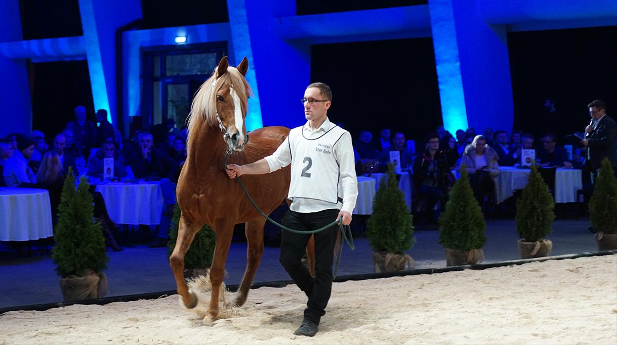 Koń Amin podczas prezentacji