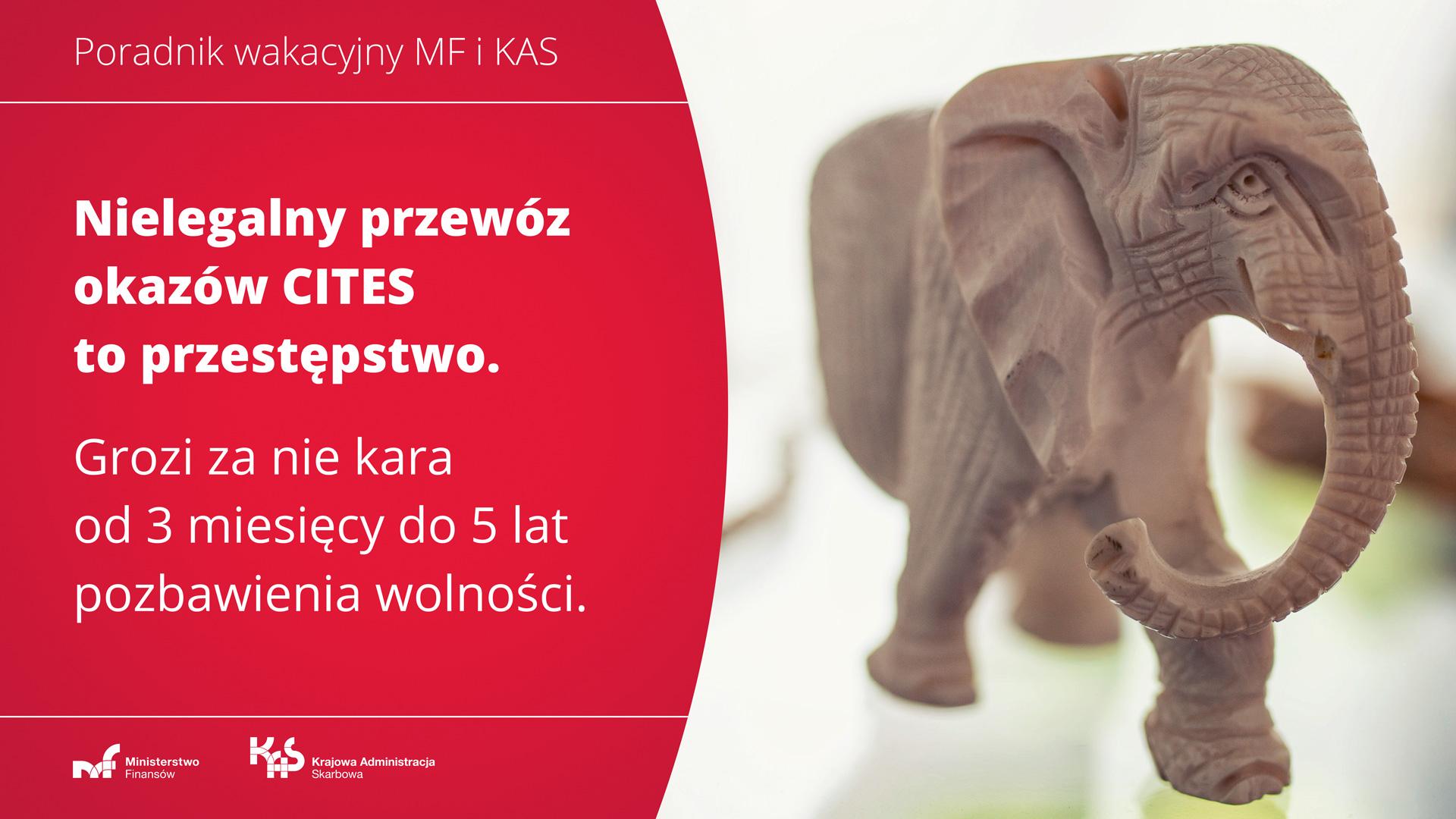 Figurka słonia zrobiona z kości słoniowej. Napis: Nielegalny przewóz okazów to przestępstwo. Grozi za nie kara od 3 miesięcy do 5 lat pozbawienia wolności.