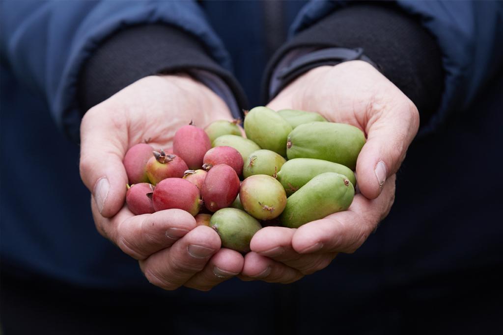 Owoce minikiwi