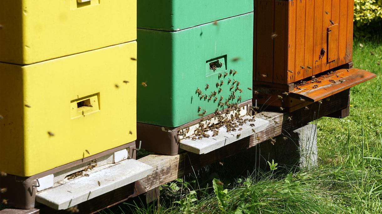 Ule i pszczoły na dziedzińcu ministerstwa