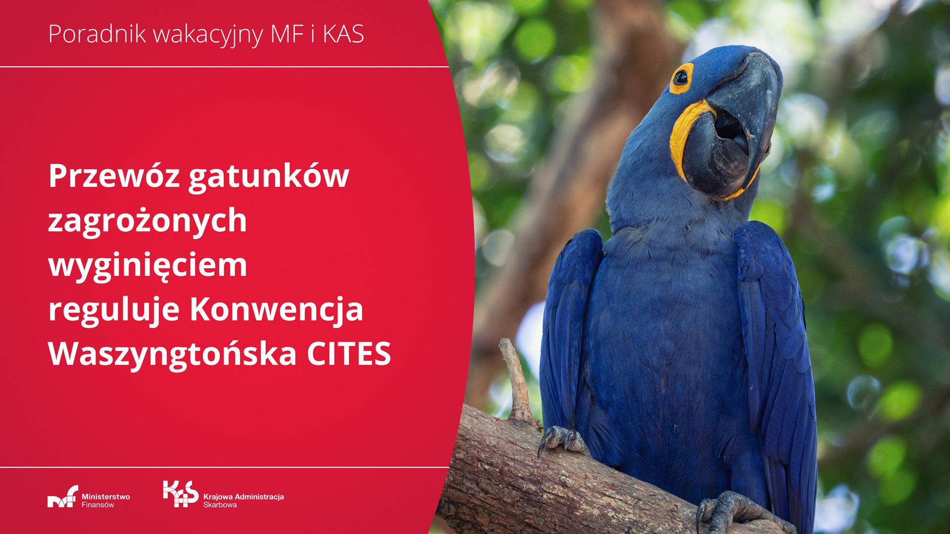 Papuga. Napis: Przewóz gatunków zagrożonych wyginięciem reguluje Konwencja Waszyngtońska CITES.