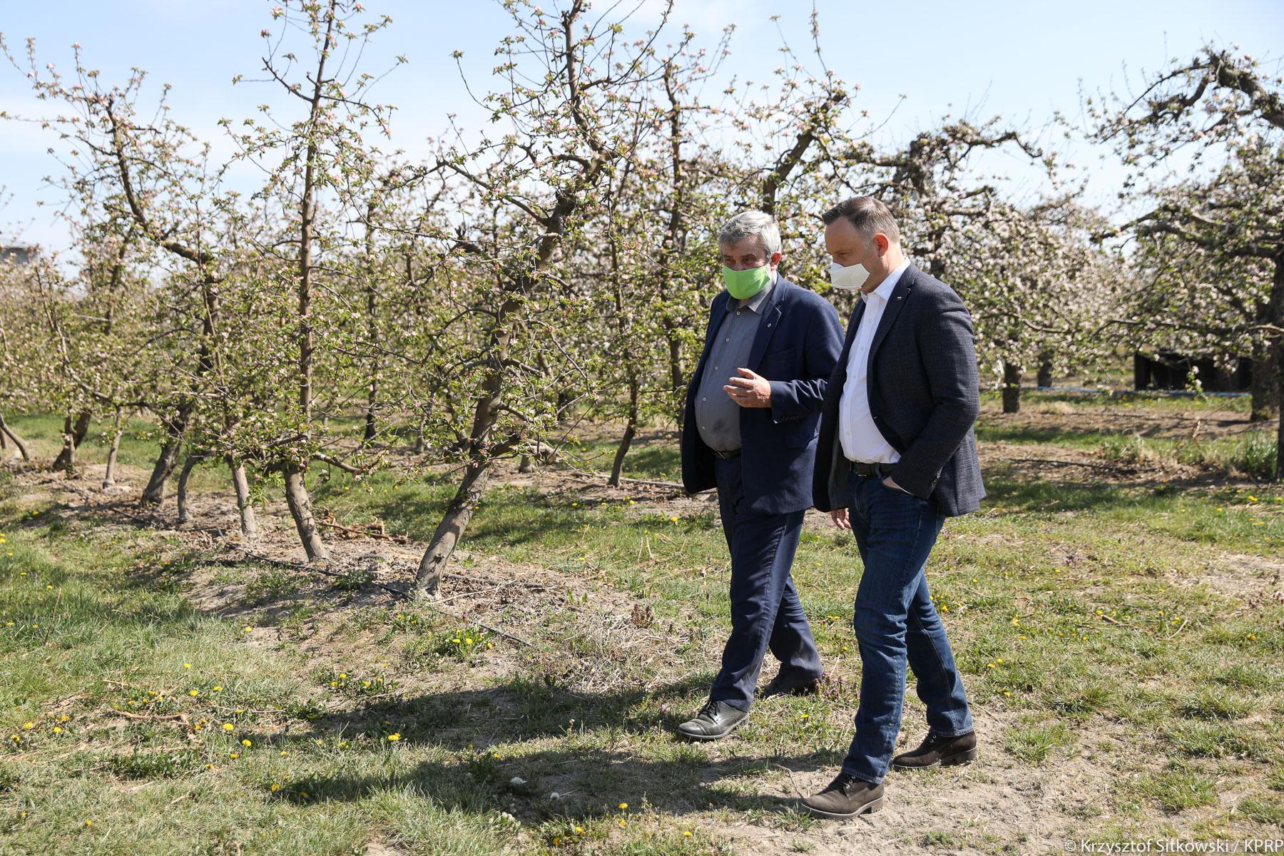Prezydent A. Duda i min. J. K. Ardanowski w gospodarstwie sadowniczym Państwa Jakubczaków pod Grójcem