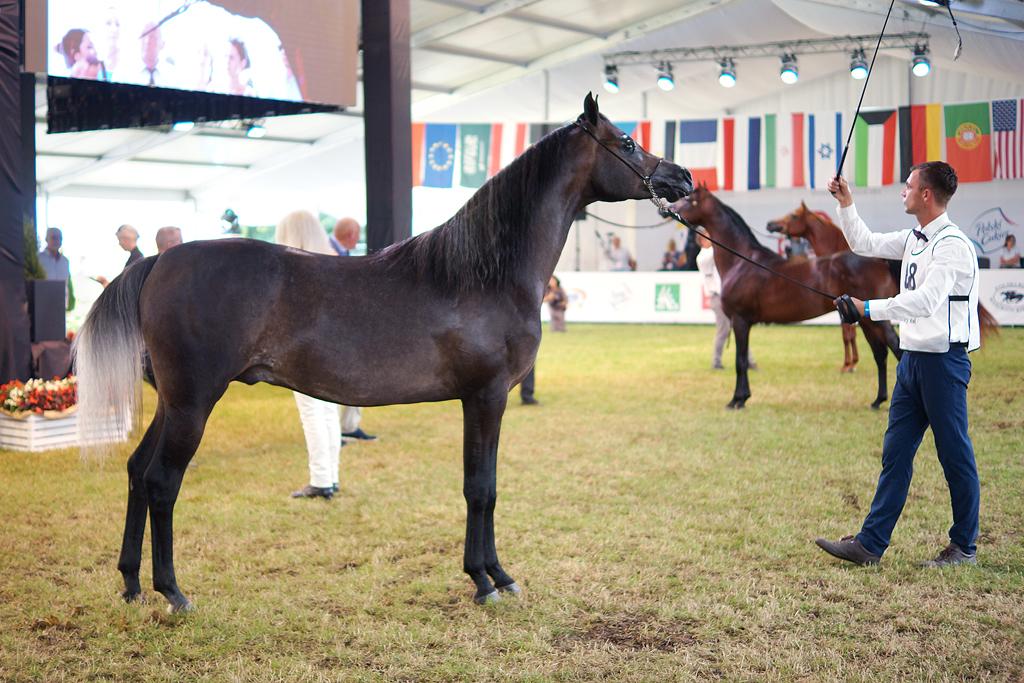 Prezentacja koni podczas Aukcji Pride of Poland 2020