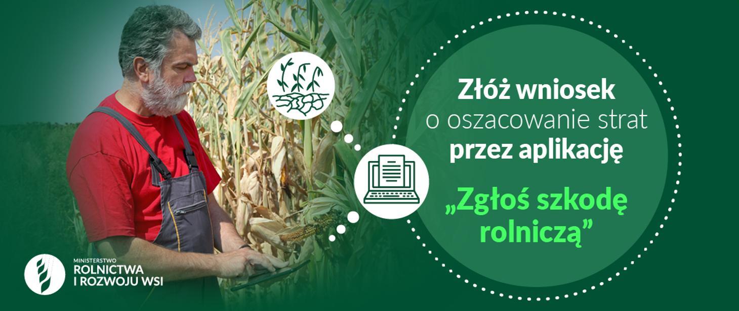 Susza - rolnik przed polem kukurydzy