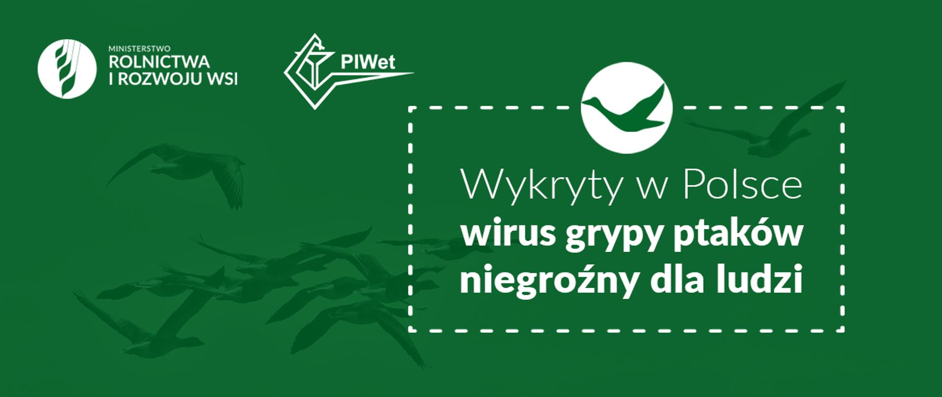 """Grafika do komunikatu """"Wykryty w Polsce wirus grypy ptaków nie jest groźny dla ludzi"""". Lecące ptaki."""
