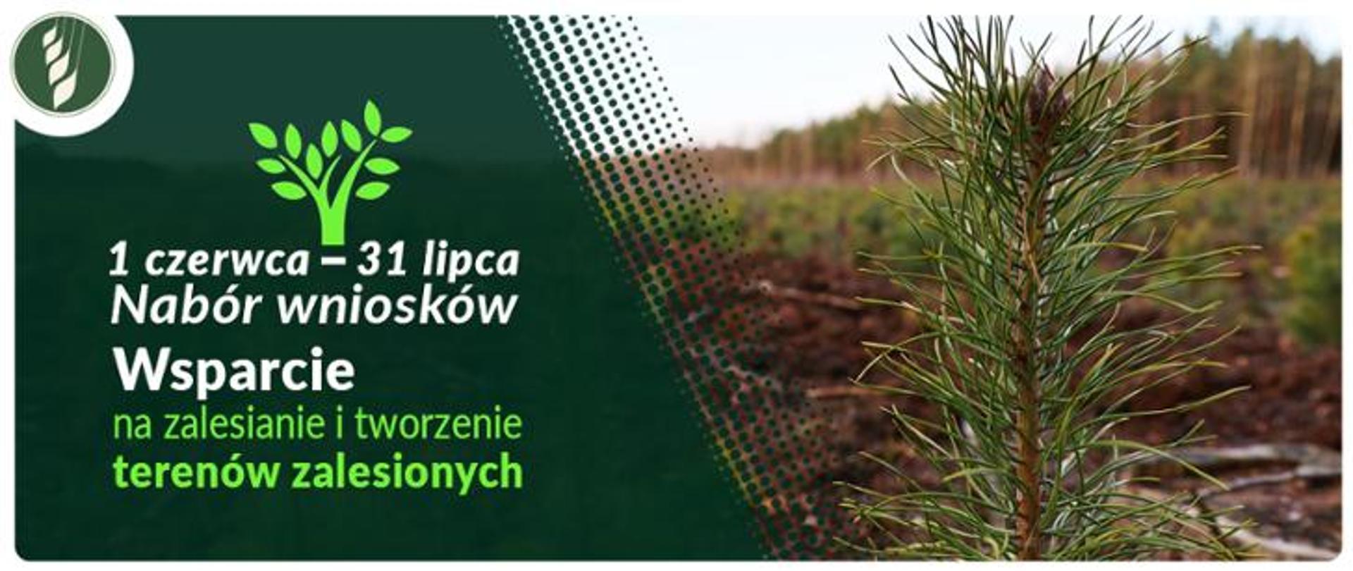 Wsparcie na zalesianie i tworzenie terenów zalesionych – nabór wniosków