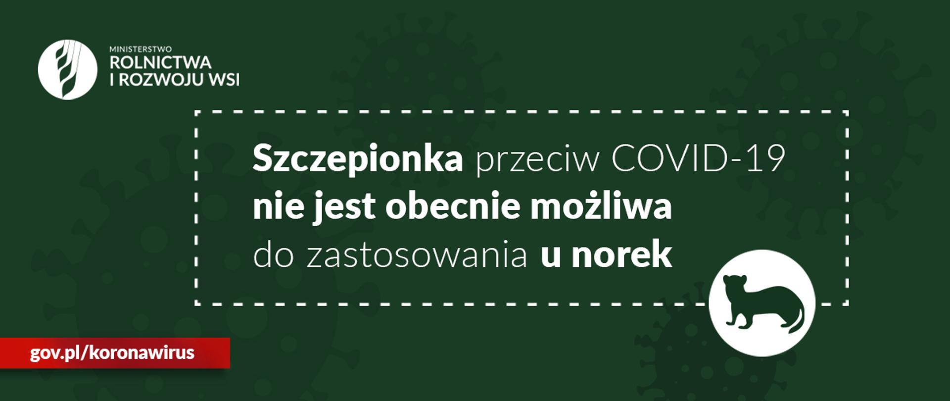 """grafika do komunikatu """"Odpowiedź na doniesienia medialne ws. szczepionek dla norek przeciw COVID-19"""" Norka i logo MRiRW na zielonym tle."""