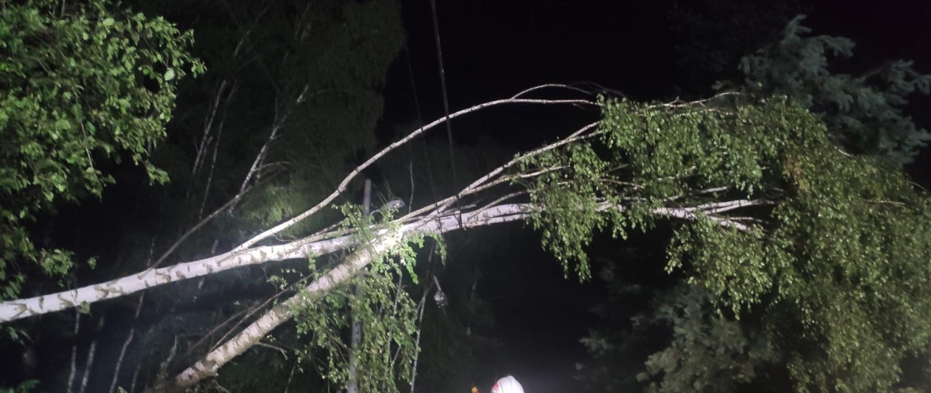 Zdjęcie przedstawia dwa przewrócone drzewa leżące na linii energetycznej. zdjęcie zrobione jest w nocy.