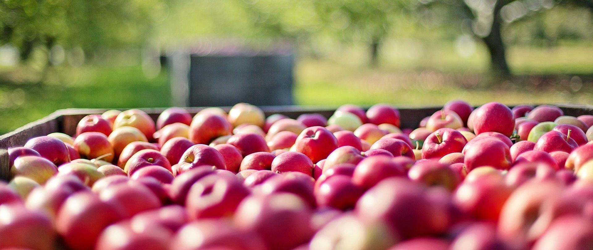 Żywność z własnego gospodarstwa – broszura