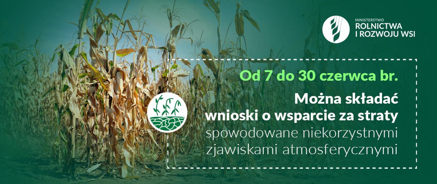 Informacja Ministerstwa Rolnictwa wnioski o wsparcie za straty