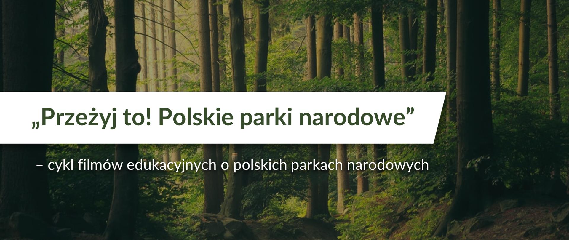 Leśna droga otoczona wysokimi drzewami. Na środku napis Przeżyj to! Polskie parki narodowe - cykl filmów edukacyjnych o polskich parkach narodowych