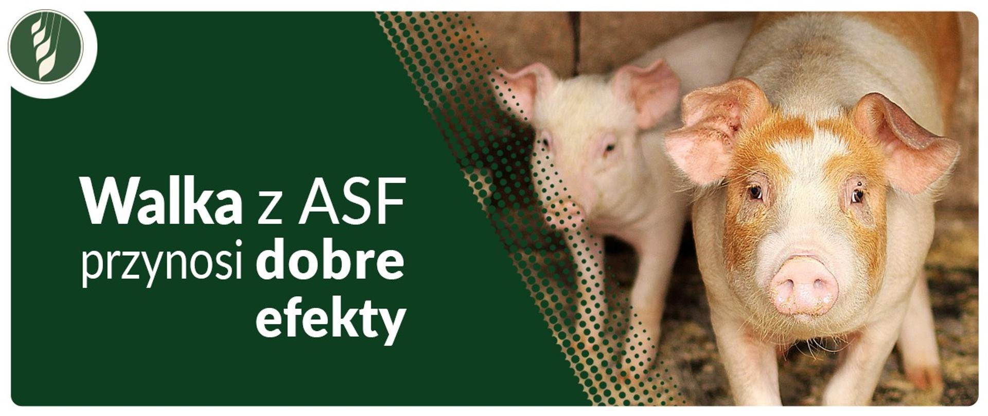 Walka z ASF przynosi dobre efekty