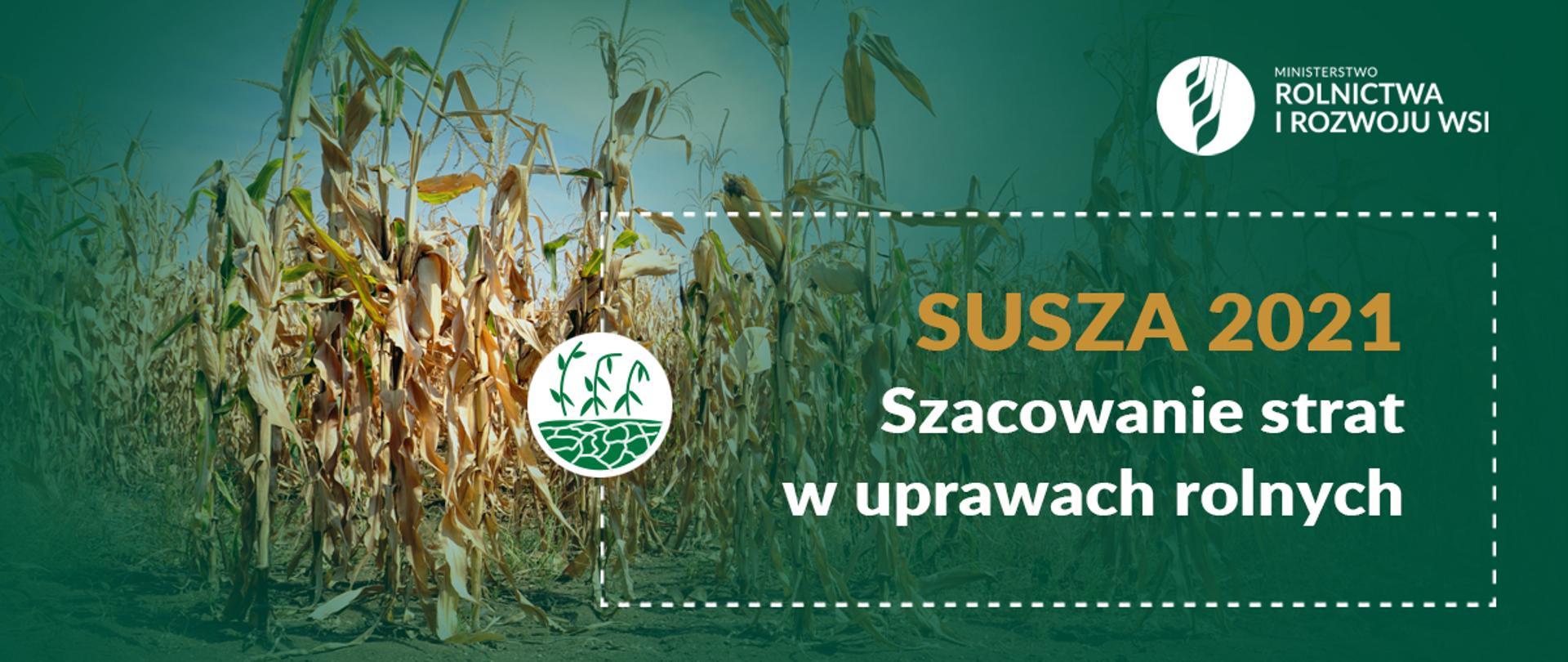 Infografika - Szacowanie strat w uprawach rolnych spowodowanych wystąpieniem suszy w 2021 r.