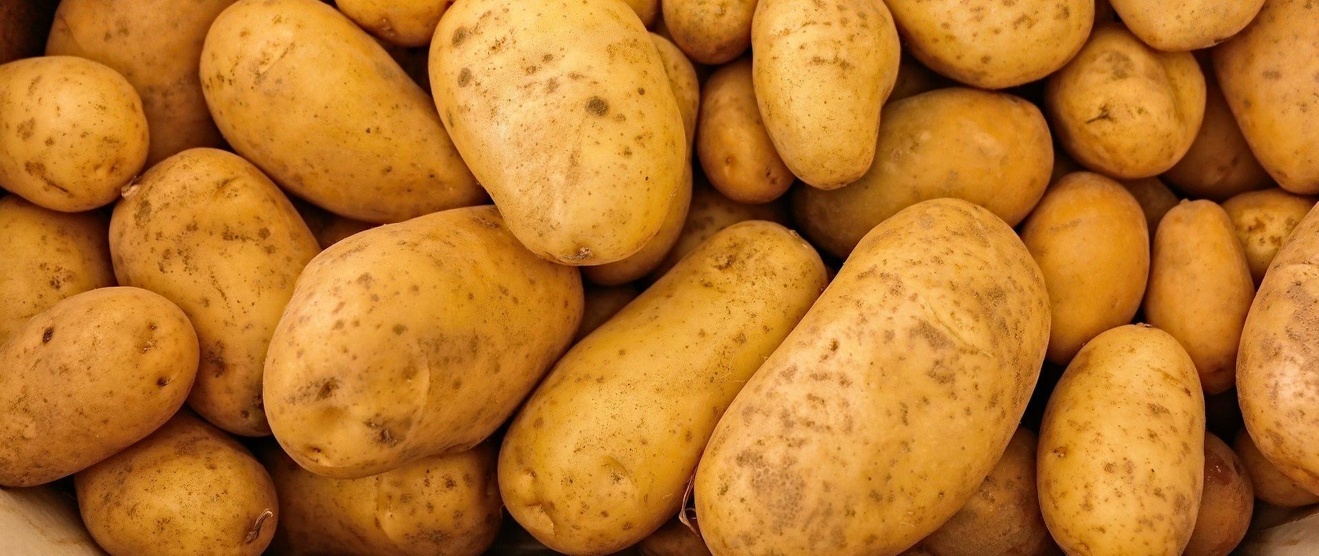 Jakość handlowa ziemniaków