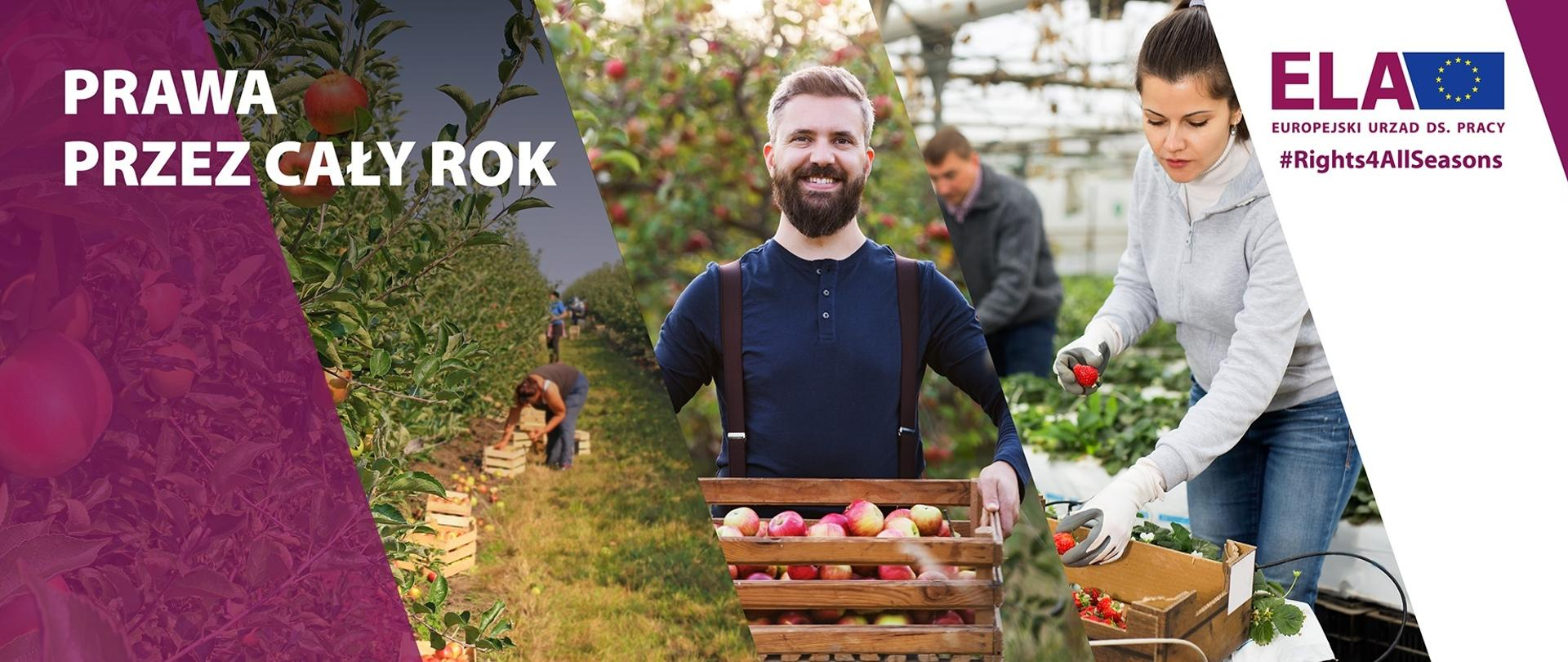 Prawa przez cały rok - kampania informacyjna dla pracowników sezonowych w UE