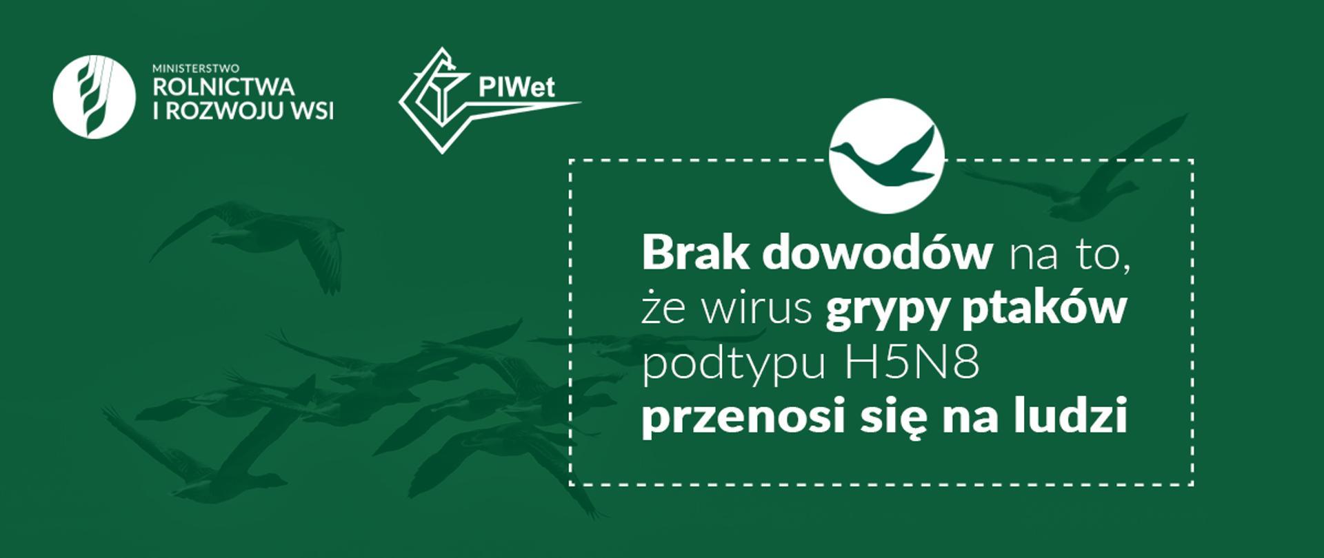 """grafika do komunikatu """"Informacje na temat wirusa grypy ptaków podtypu H5N8"""". Lecące ptaki na zielonym tle."""
