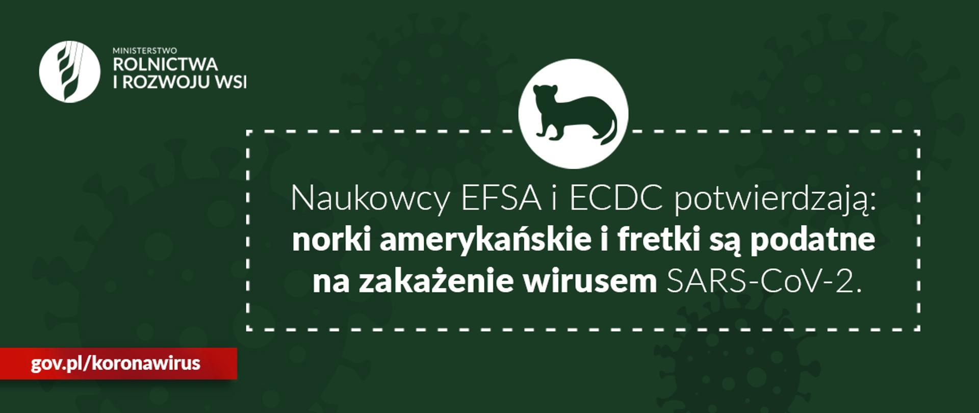 "grafika do komunikatu ""Raport naukowy EFSA i ECDC ws. koronawirusa u norek"""