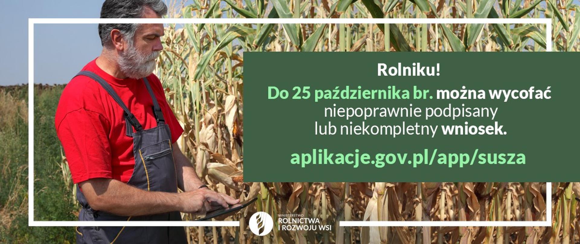 rolnik na polu kukurydzy