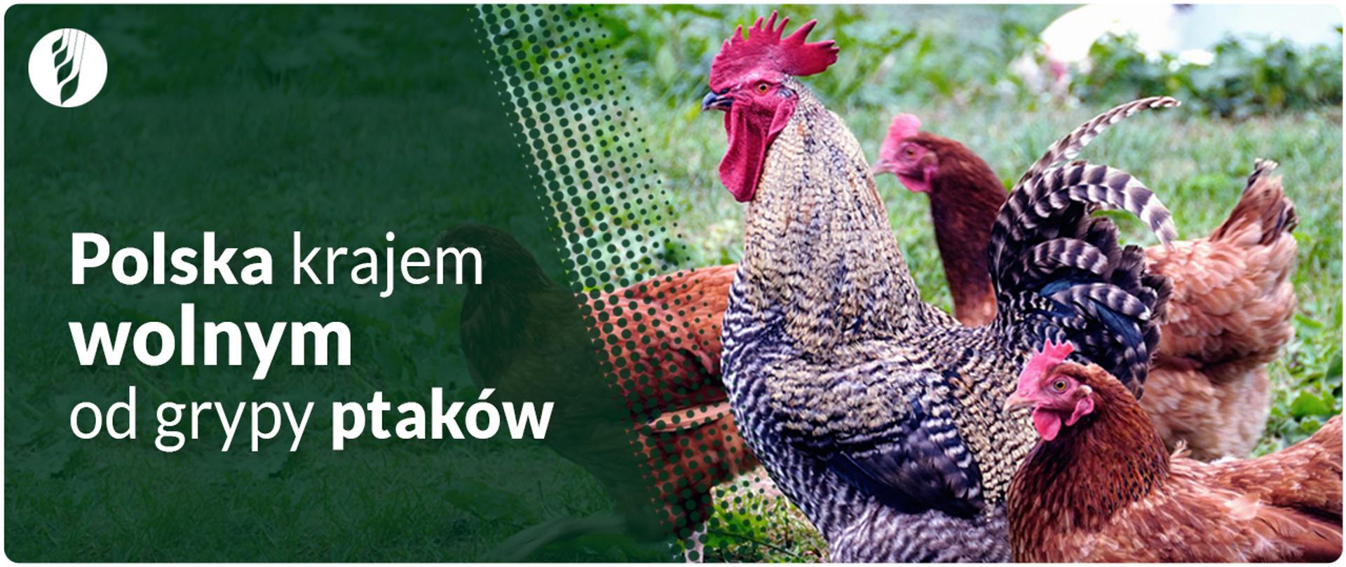 Polska krajem wolnym od grypy ptaków
