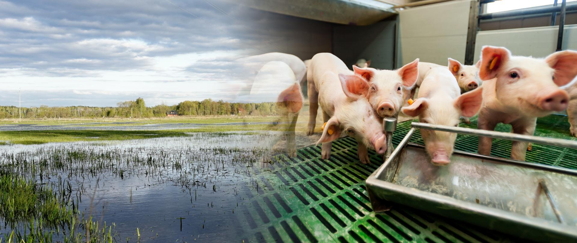 Inwestycje zapobiegające zniszczeniu potencjału produkcji rolnej